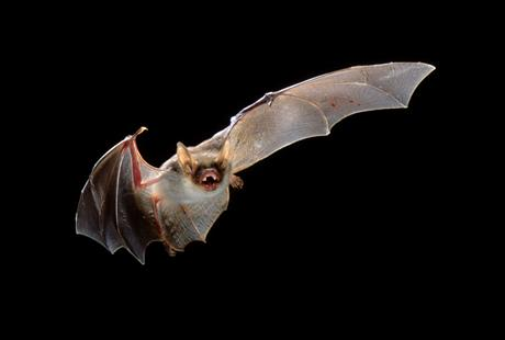 Bat Walk in Ramsbottom