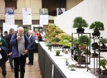 The National Bonsai Show